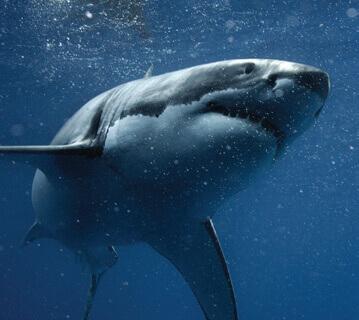 Medical Conference CME MAUI Shark Bites