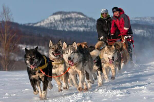 Dog Sledding cme course